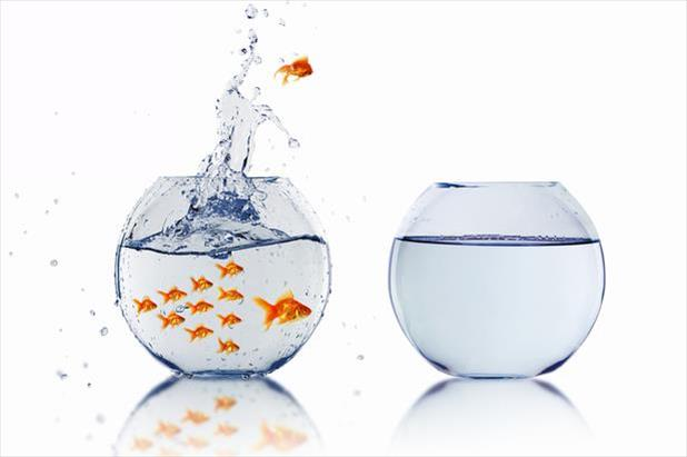 Goldfish leaving the bowl for a better opportunity