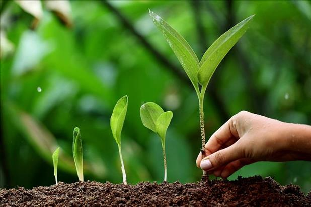 hand picking a growing plant out of the ground