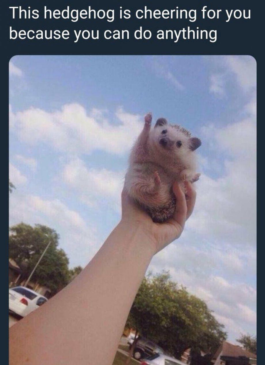 Cute hedgehog with his arm raised as if he's cheering.
