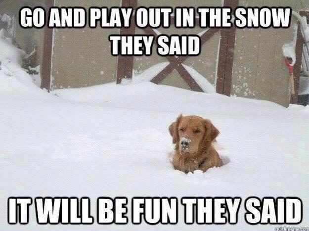 meme: Go and play out in the snow they said. It will be fun they said.