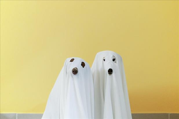 Two dogs in ghost costumes