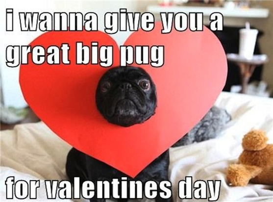 """Meme: """"I wanna give you a great big pug for Valentine's Day."""""""