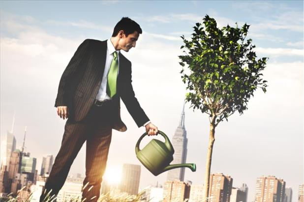 employee watering a tree