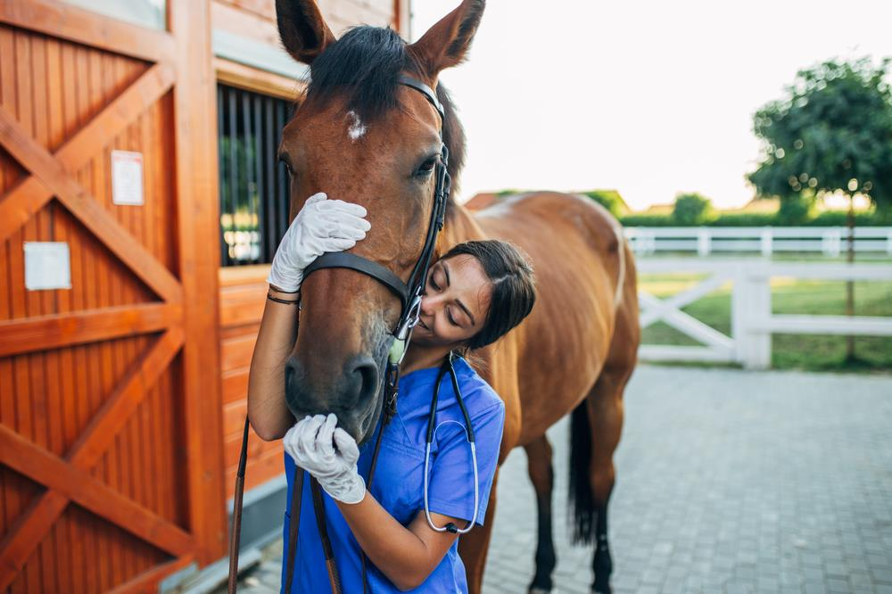 female equine veterinarian holding a horse's head in a loving way