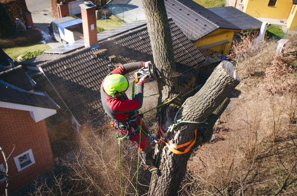 arborist working on a tree in a residential area