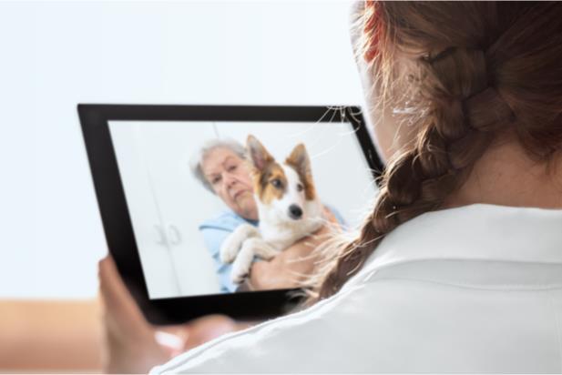 receiving veterinary telehealth services